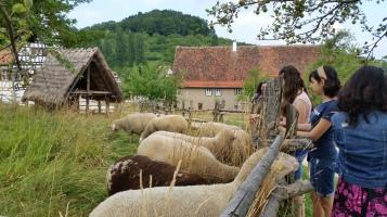 zoo - farm pic