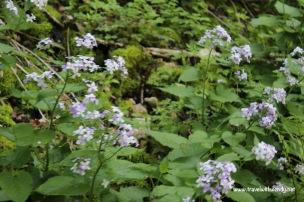 TWW - flowers on the trail Wildenstein