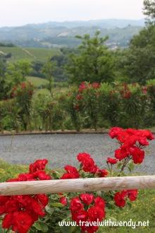 TWW - hills of Piemonte