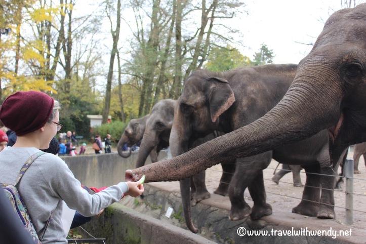 feeding-the-elephants-visit-hamburg
