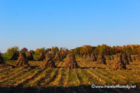 tww-daytripping-through-the-adirondacks-amish-hay-fields