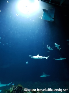 tww-shark-tank-tierpark-aquarium-visit-hamburg