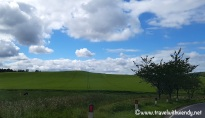Driving ~ Passing fields of green - the Highlands