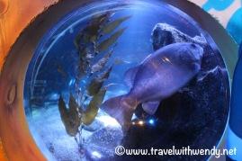 Sealife Aquarium - Berlin