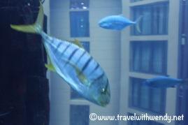 Sealife Aquarium - riding the Aquadom