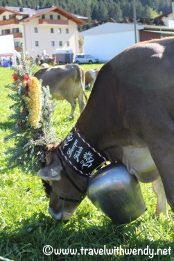 Cows and big bells