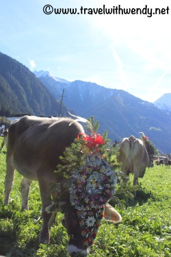 Fields of Cows